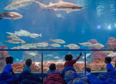 Dormir con tiburones en L'Aquàrium